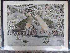 Original  Rex Brasher#211b,211c Hand Colored Bird Print FL C Rail  #211bREX2 DSS