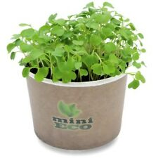 2000 Rocket Arugula Bio Seeds Microgreen Grow Kit Herb Plant Sprouting Vegetable
