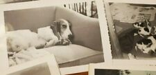 Vintage 1950s Basset Hound Mother Dog & Puppy Litter Photos Lot of 8 Side Eye