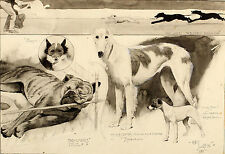 1895 CECIL ALDIN | original artwork | Sketches Ladies Kennel Association | DOGS