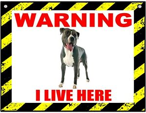 Warning I Live Here - Staffordshire Bull -dog- Metal Sign For Indoor or Outdoor