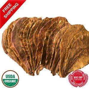 12 Indian Almond Leaves, Catappa, Dried, 14cm -18cm, for Fish, Shrimp, Aquarium