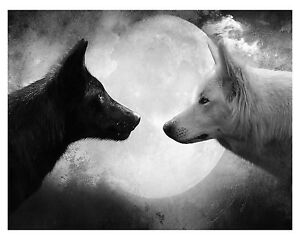 Black And White Wolves - Night Moon Animals Large Poster / Canvas Picture Print