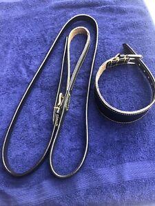 Dog Lead Dog Collar Greyhound Lurcher