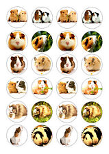24 GUINEA PIG / PIGS  CUPCAKE TOPPER WAFER RICE EDIBLE FAIRY CAKE BUN TOPPERS