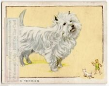 Cairn Terrier Dog 80+ Y/O Trade Ad Card