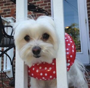 Puppy Bumpers® Keep Your Dog on the Safe Side of the Fence Red Rainy Day 3 sizes