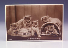Vintage Is Mother Coming - Comical Cats 1940's Postcard - Lovely!