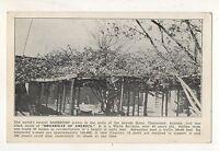 Largest Rose Bush, Arcade Hotel TOMBSTONE AZ Vintage Arizona Roadside Postcard