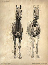 Framed Vintage Veterinary Print – Horse Skeleton (Picture Poster Art Anatomy)