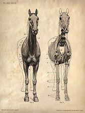 Enmarcado Vintage veterinarios impresión – Caballo Esqueleto (imagen de arte cartel Anatomía)