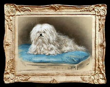 Maltese Terrier Dog  Miniature Dollhouse  Picture