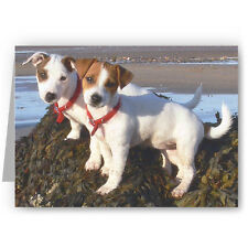 Jack Russell Puppies Greeting Card - Dog