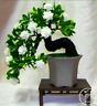 100 PCS Seeds Gardenia Plants Cape Jasmine Home Garden Potted Bonsai Flowers New
