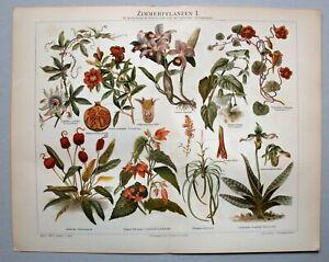 Botanik, Passionsblume u.a - Diverse Abbildungen - 2 Chromolithographien 1896