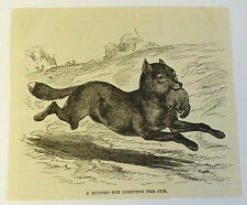1883 magazine engraving~ Hunted Fox Carrying Her Young Cub