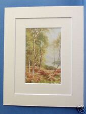 LOCH ACHRAY BIRCHES PERTHSHIRE SCOTLAND 1912 DOUBLE MOUNTED PRINT 10X8 OVERALL