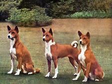 BASENJI CHARMING DOG GREETINGS NOTE CARD BEAUTIFUL GROUP OF THREE DOGS