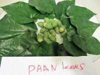2 Paan Piper Betel Plant in 1 pot Betle Herb Vine Spice Stimulant Medicinal Uses