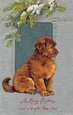 Irish Water Spaniel Puppy Dog ? ~ A Merry Christmas & A Bright New Year Postcard