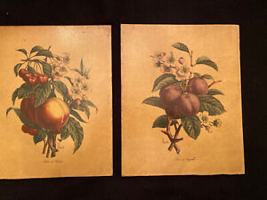 Vintage Fruit Prints Processed On Wood By Nostra  Set Of Two