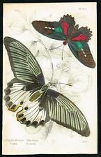 1837 Great Mormon Swallowtail Butterfly, Antique Hand-Colored Entomology Print