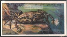 Pom-Pom or Boxer Crab c90 Y/O Trade Ad Card
