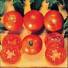 Czechs Bush Tomato Seed