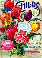 1898 Childs Tulips Vintage Flowers Seed Packet Catalogue Advertisement Poster