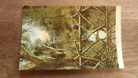 OLD AUSTRALIAN POSTCARD OF BALLARAT VICTORIA, BOTANIC GARDENS FOREST c1900