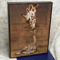 'Makulu - Giraffe First Kiss' Print by Ron D'Raine On Wood 16in x 12in Very Good