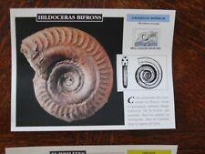 carte FICHE CARD cartonné dinosaure hildoceras bifron fossile