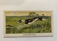 1925 Turf Cigarettes WATERLOO CUP Sport Records #22 Greyhound Coursing Fullerton