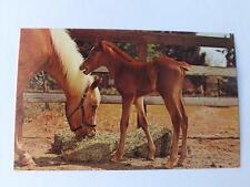 SUNBEAM BUNGALOWS POSTCARD GREETINGS CALLANDER ONTARIO CANADA NORTH BAY HORSES