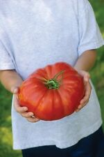 Tomato Seeds - STEAKHOUSE - Giant Tomatoes - Hybrid - NON GMO - 25 Seeds