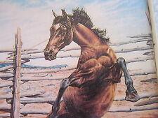 American Quarter Horse Journal LOT Equestrian Race Rodeo Cowboy Horse Lover 1978