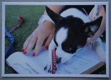 The Lost Dogs Home Mika Adoption Form Postcard