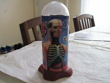 Human Anatomy Body 4D Puzzle Human Anatomy Model 32pcs Torso