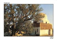 BR25821 Tozeur Th thousand year old jujube tree of Sadi ali bou Lifa tunisia