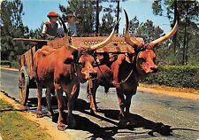 BR8388 Minho chariot de boeufs avec une attache ornementee  portugal