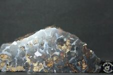Pallasite Meteorite from Kenya Africa Sericho Habaswein 321 gram end cut