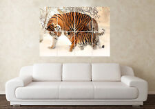 Large Snow Tigers Wildlife Male Pet Africa Safari Wall Poster Art Picture Print