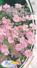 graines de fleurs Gypsóphila élégant rose - fleurs graines jardin - 0.5 gramme