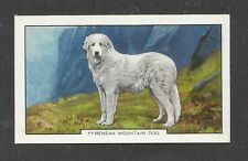 1938 Uk Art Body Gallaher Cigarette Card Great Pyrenees Pyrenean Mountain Dog