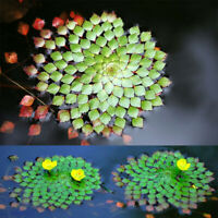 10Pcs Ludwigia Sedioides Seeds Mosaic Water Aquatic Plant Pond Decor Garden Home