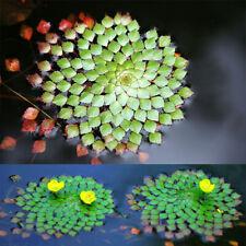10Pcs Ludwigia Sedioides Seeds Mosaic Water Aquatic Plant Pond Decor Garden Home