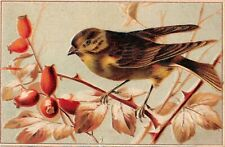 Pretty Brown Bird Perched on Bush With Berries - 1910 Postcard - No. 300