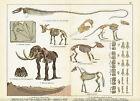 Pleistozän Fossilien Petrefakten Tiere Mastodon LITHOGRAPHIE von 1886