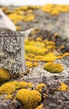 Scottish yellow moss 10 seed pack