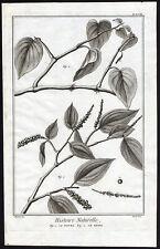Antique Print-BLACK PEPPER-BETEL-Diderot-1751